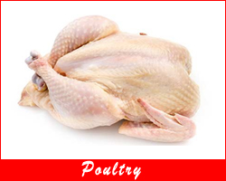 productpoultry